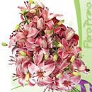 Flora Prima Lilien 130x130